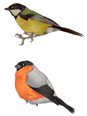 Zwierzęta Ptaki Superkid