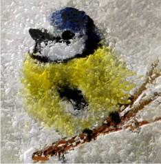 Ptaki Zimą Pytania Superkid