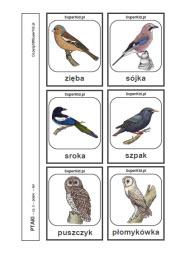 Obrazki Do Wydruku Ptaki Superkid