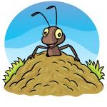 Konik Polny I Mrówka Superkid