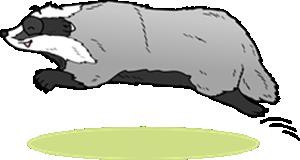 Zwierzę Miesiąca Borsuk Superkid
