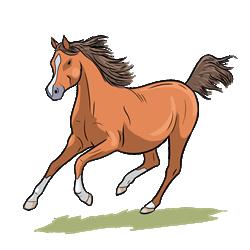 Zwierzę Miesiąca Koń Superkid