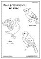Kolorowanki Ptaki Polski Superkid