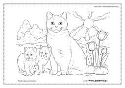 Kolorowanki Koty Rasy Kotów Superkid