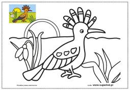 kolorowanki- ptaki świata - dudek