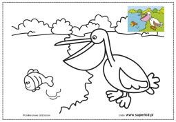 kolorowanki- ptaki świata - pelikan