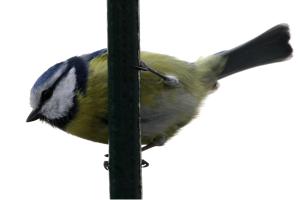 Przyroda I Ekologia Karmnik Dla Ptaków Superkid